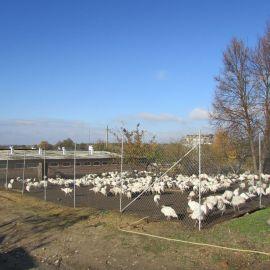 Сейчас в Глинской пустыни - большое натуральное хозяйство. Монахи выращивают кур, индюшек, коров и свиней на продажу Паломническая поездка в Глинскую пустынь. 21-22.10.2017 г.