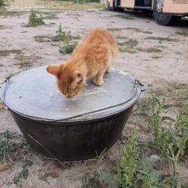 Помощник по мытью котлов Выезд на природу, 4.09.2021 г.